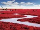 panjin-red-beach-china-1