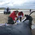view post When a whale gets stranded and washes up on the shores of England or Wales, Rob Deaville races to the scene to investigate why it happened.